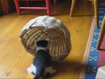 3 funny kittens and a basket. stock video