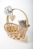 Kittens in basket with hearts Stock Image