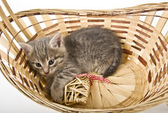Kittens in basket with hearts Royalty Free Stock Photo