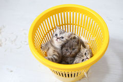 Kittens in the basket Stock Photo