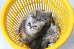 Kittens in the basket Stock Photos