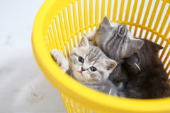 Kittens in the basket Stock Images