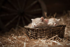 Kittens in a basket Stock Photos