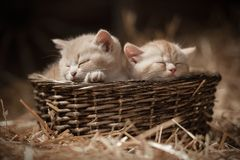 Kittens in a basket Stock Photo