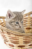 Kittens in basket Royalty Free Stock Photos