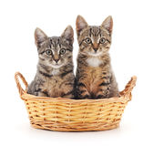 Kittens in a basket. Stock Images