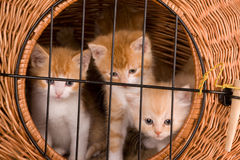 Kittens behind bars Royalty Free Stock Photography