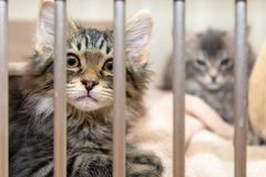 Kittens behind bars of cage in shelter Royalty Free Stock Photo