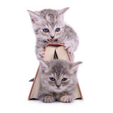 Kittens with book Stock Image