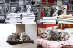 Kittens, books, pillow and playground, screen split in four parts Royalty Free Stock Photos
