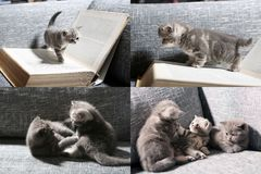 Kittens, books, pillow and playground, screen split in four parts Stock Photography