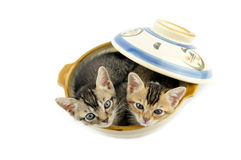 Kittens in bowl Royalty Free Stock Images