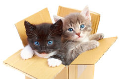 Kittens in box. Isolated on white background Stock Photo