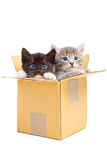 Kittens in box Stock Photos