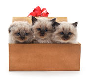 Kittens in the box. Royalty Free Stock Photos