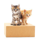 Kittens on the box. Royalty Free Stock Photo