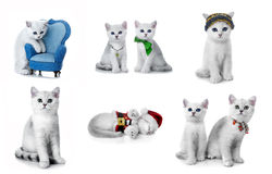 Kittens of the British breed. Stock Image