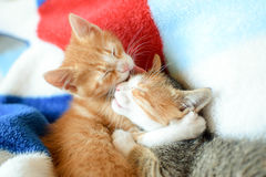 Kittens. Brother and sister love each others Stock Photo