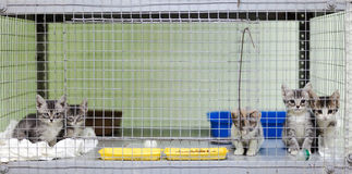 Kittens in a cage at the animal shelter Royalty Free Stock Image