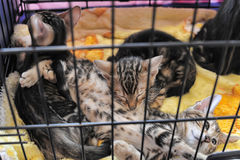 Kittens in a cage Royalty Free Stock Image