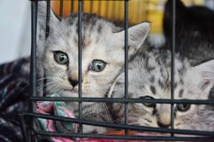 Kittens in the cage Royalty Free Stock Image