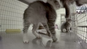 Kittens in cage stock footage