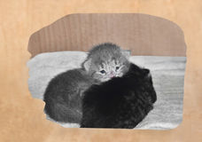 Kittens in of a cardboard box Royalty Free Stock Photos