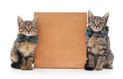 Kittens and cardboard. Royalty Free Stock Photos
