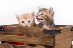 Kittens in a cart Royalty Free Stock Photos