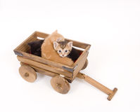Kittens in a cart Stock Photography