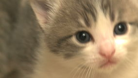 Kittens and cats 19 27 stock video footage