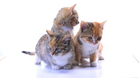 Kittens stock footage