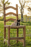Kittens in a chair Stock Photos