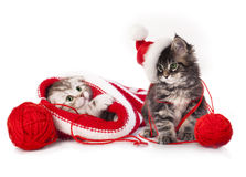 kittens With Christmas decorations Stock Photo