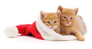 Kittens in Christmas hat. stock photo
