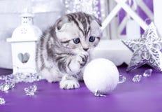 kittens Christmas Royalty Free Stock Photos