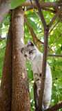 Kittens climbing trees. Kick cats are staring behind the bush Royalty Free Stock Photos
