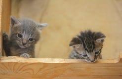 Kittens climbing on a wooden board stock photos