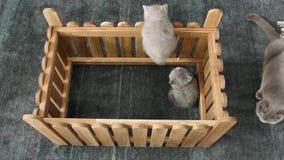 Kittens climbing a wooden fence