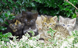 Kittens Cuddling Stock Images