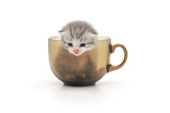 Kittens in cup Stock Photos