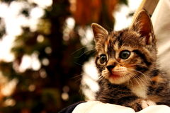 Kittens. Cute pictures of animals: kittens Stock Photography