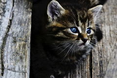 Kittens. Cute pictures of animals: kittens Stock Image