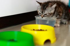 Kittens drinking water stock images