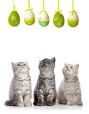 Kittens and easter eggs Stock Image