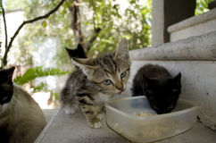 Kittens eat on the concrete stairs in courtyard Royalty Free Stock Image