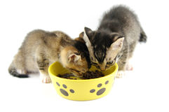 Kittens eating dry food Royalty Free Stock Photography