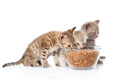 Kittens eating dry food. isolated on white background Royalty Free Stock Photography