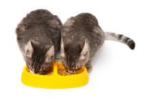 Kittens eating food Stock Images