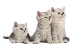 Kittens family Royalty Free Stock Photos